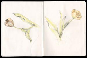 Duo_Drawing_Tulips_at_My_Kitchen_Table
