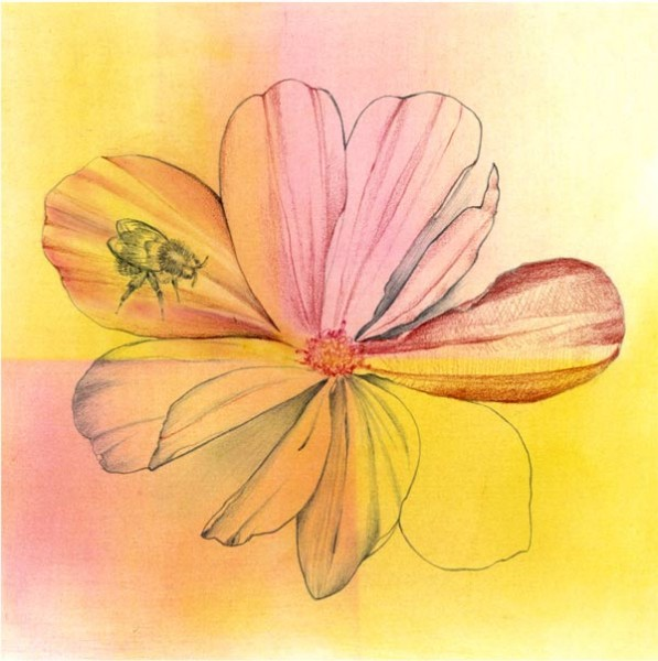 cosmos and bee drawing by Iskra