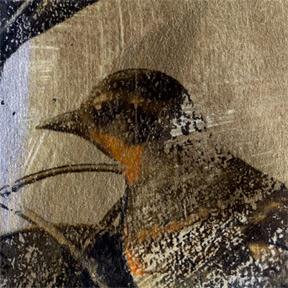 Close-Up-Birds-Head