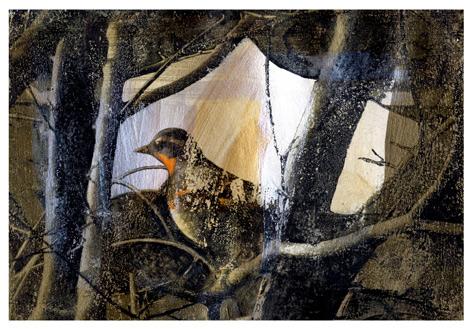 The-Golden-Bird