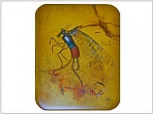 Insect1_FredLisaius
