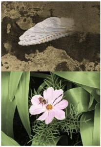BeeAndFlower-PhotoCollage