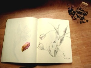 Drawing Flowers at my Kitchen Table
