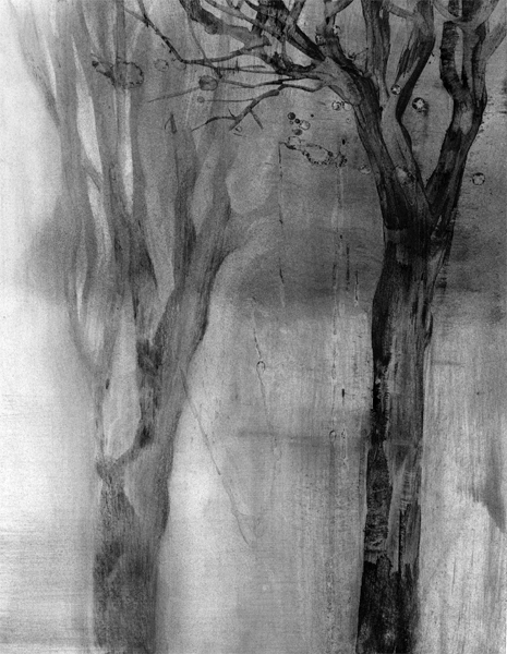Duo, charcoal dust tree drawing