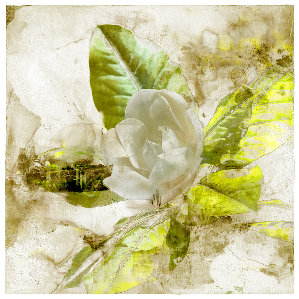 Limited edition magnolia print by Iskra