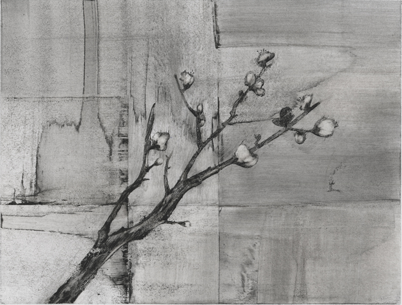 Plum Branch, charcoal drawing