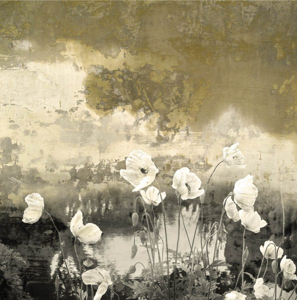 Poppies Remembered, limited edition print