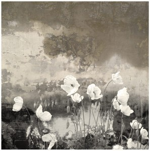 Poppies Remembered Fine Art Print