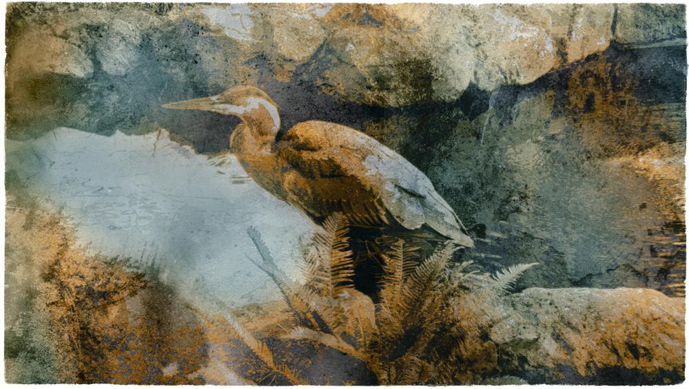 The Heron, transfer print