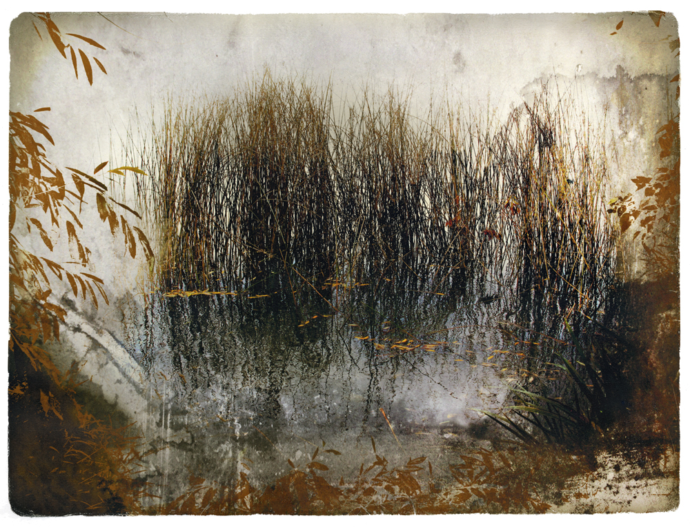The Reeds, transfer print, Edition of 3, (SOLD)