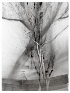 The Tree At Ice Lake