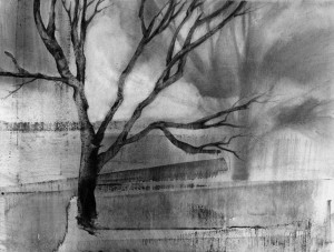 Tree and Shadow 1