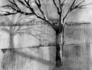 Tree and Shadow 3, charcoal drawing
