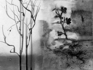 specimen,contemporary botanical drawing