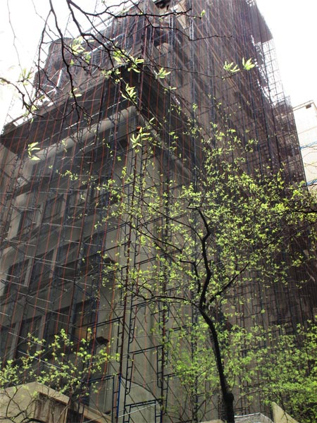 Veiled Building with Tree, New York