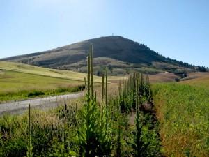 Approaching_Steptoe_Butte