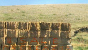 HAYBALES-FOR-SALE