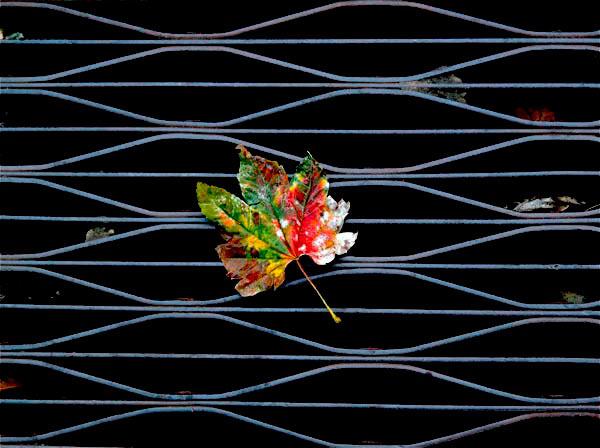 Leaf_On_Grille