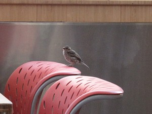 Little_Sparrow_of_the_FoodCourt