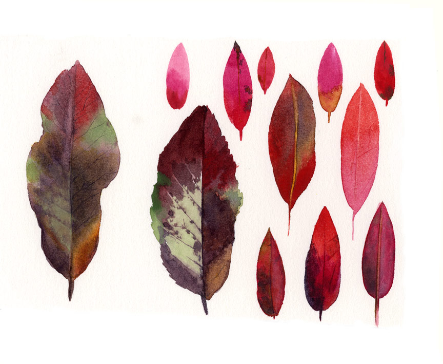 From One Tree Botanical Watercolor Study