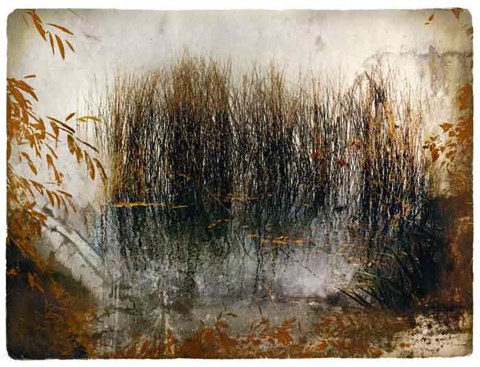 The Reeds Transfer Print