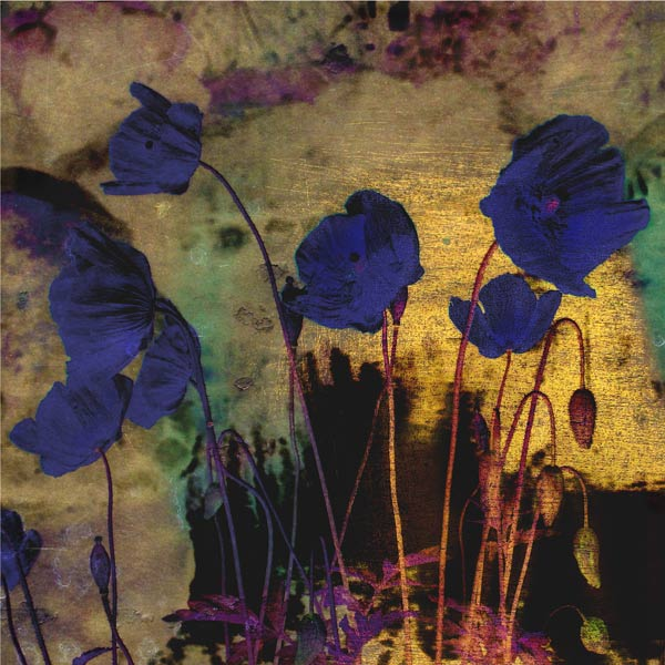 Blue Tulips For Redon, archival pigment print