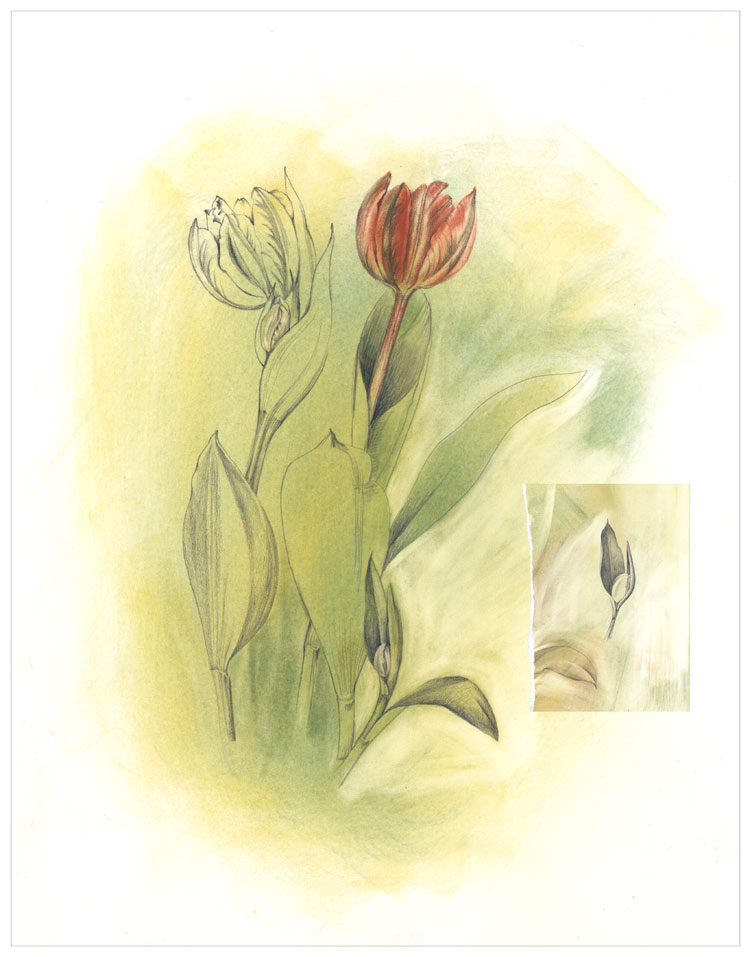 Tulips For Easter Mixed Media Drawing
