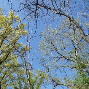 Central Park Spring Sky