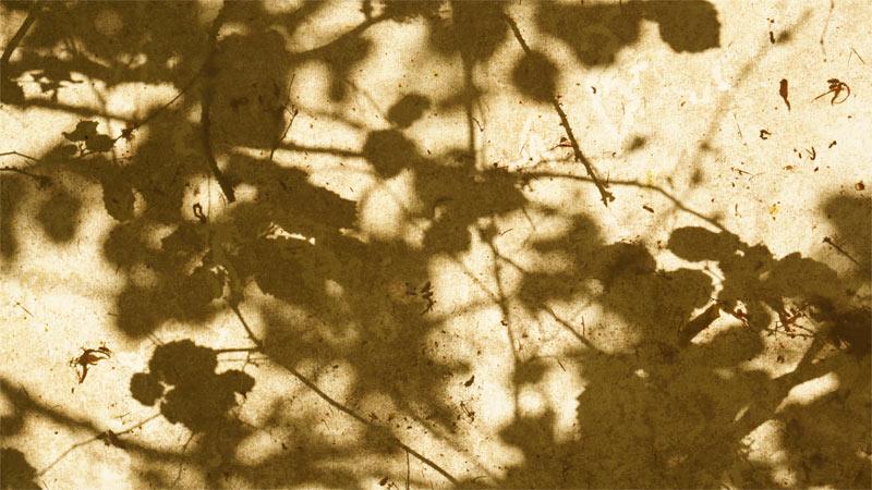 August Shadows