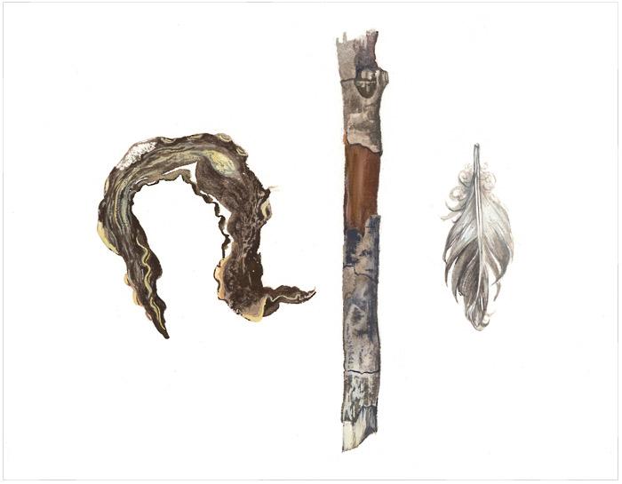 Specimen Still Life in Gouache