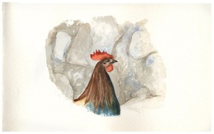 Solo Rooster_watercolor