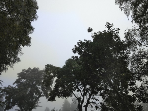 The Grove in Fog