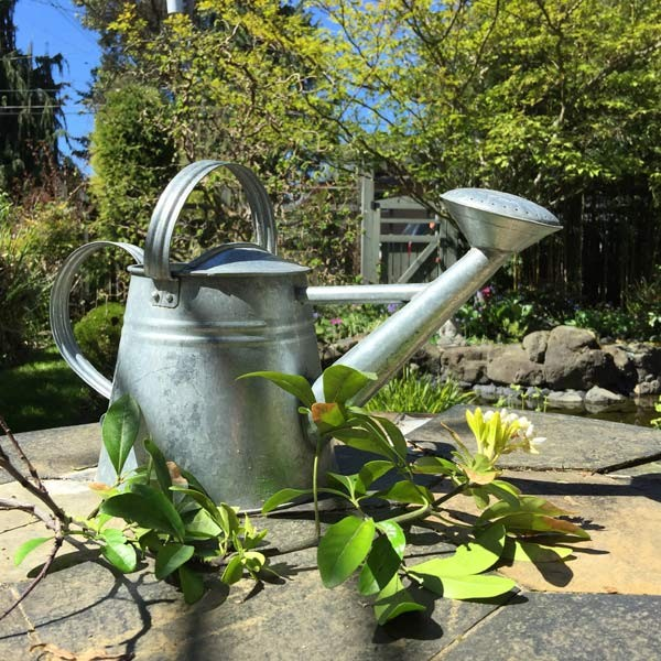 Watering_can_spring