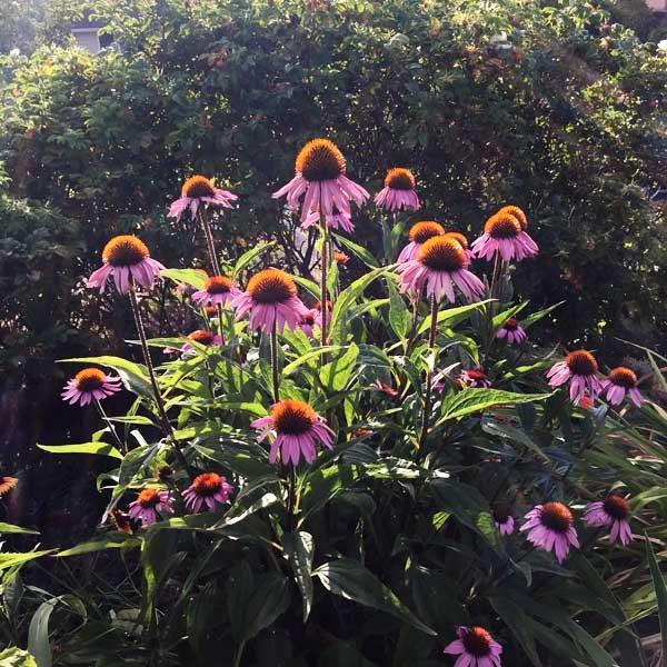 Jennifer's garden