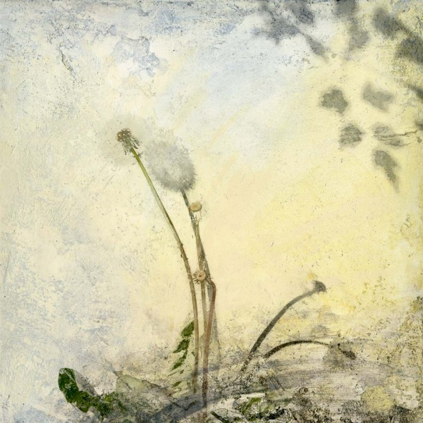 Dandelion for Dürer, By Iskra Johnson, archival digital print