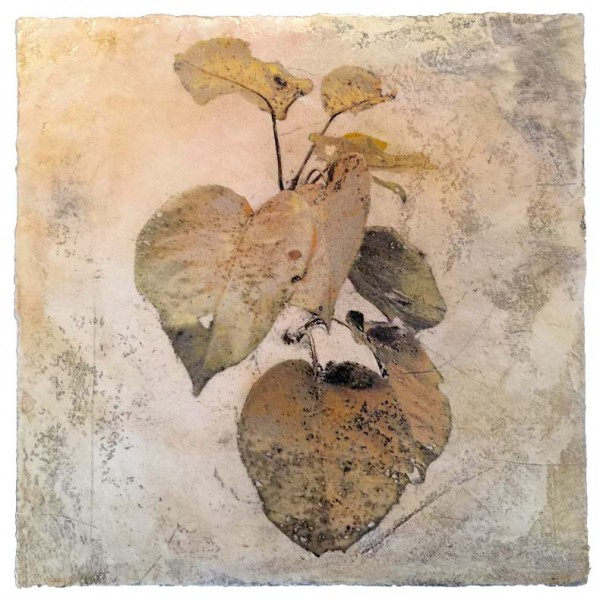 The Pear Apple Tree, Early November, mixed media on plaster © Iskra Johnson