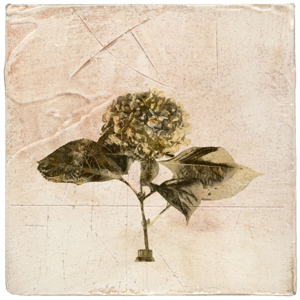 Hydrangea contemporary botanical art on plaster by Iskra