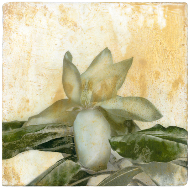 Magnolia-Mixed-Media-on-Plaster-Iskra
