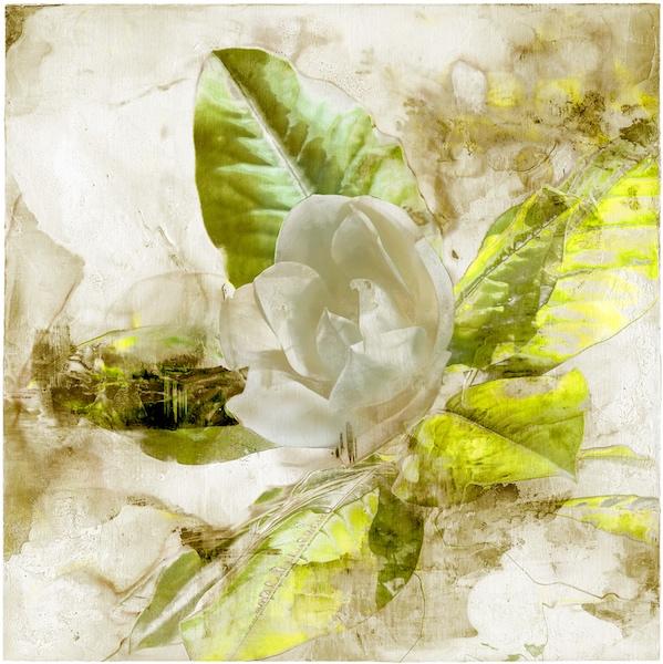 Magnolia-botancial=print-by-Iskra