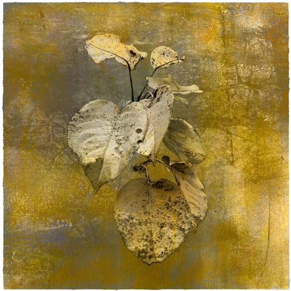 Pear-Apple-Botanical-Print-Iskra