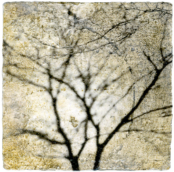 Tree Shadow Mixed Media by Iskra Fine Art