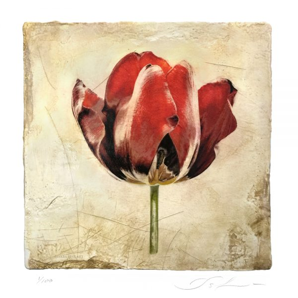 Tulip Botanical Print for Mother's Day