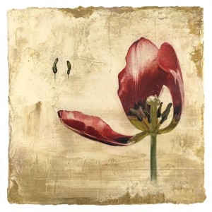 Opening Tulip, contemporary mixed media botanical by Iskra