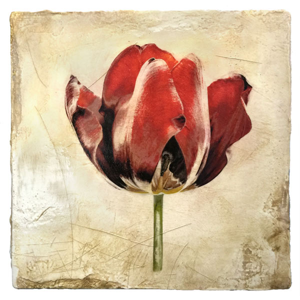 Tulip Contemporary Botanical on Venetian Plaster by Iskra