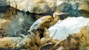 Visitation The Heron print by Iskra