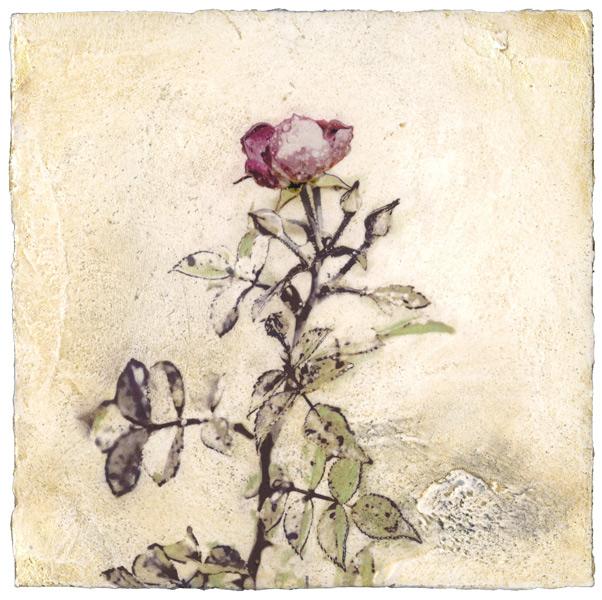 Autumn Rose Venetian plaster by Iskra