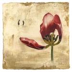 Tulip-Opening-Botancal-Iskra