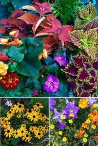 Artist's garden Iskra Fine Art