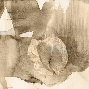 Specimen Study: The Flower, print by Iskra