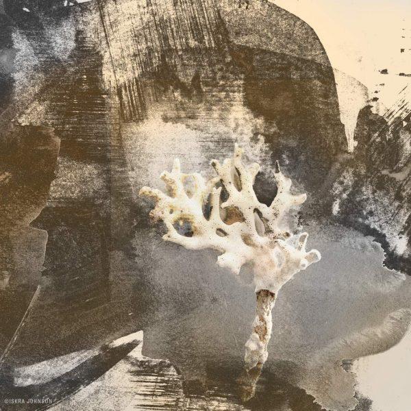 Specimen Study, Coral print by Iskra